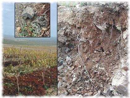 Tipos principales de suelos