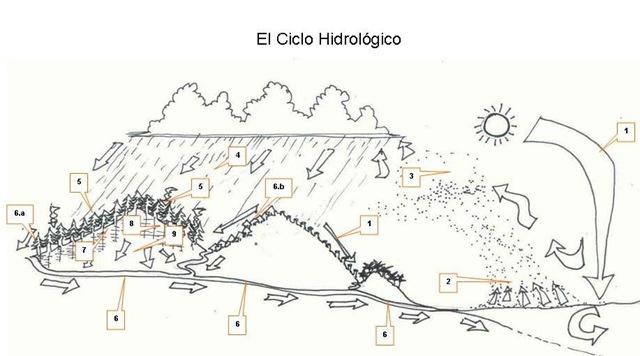 el ciclo hidrológico[6]