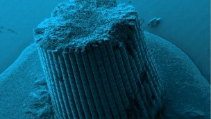 """Los erizos de mar están hecho con una """"receta"""" que puede servir para crear un cemento más fuerte."""