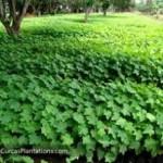 Aguas Residuales para la Producción de Biodiesel