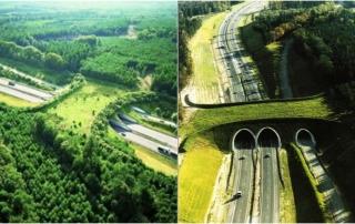 Ecoductos