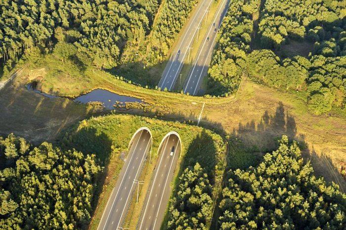 Puentes y cruces para animales 17