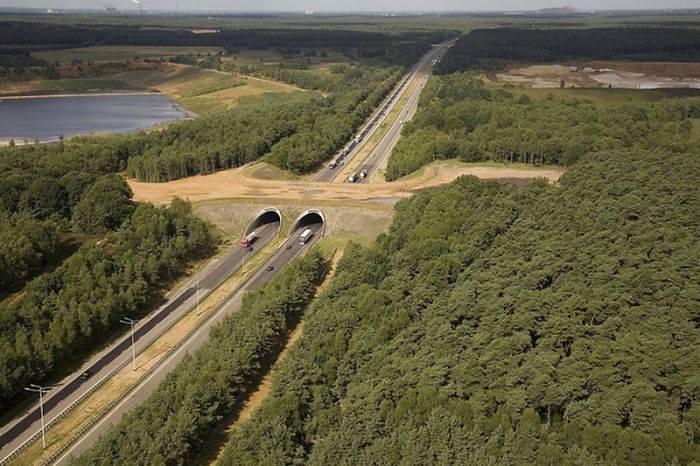 Puentes y cruces para animales 19