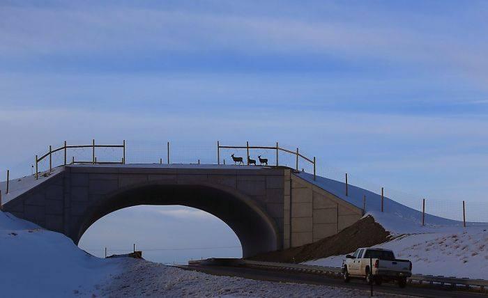 Puentes y cruces para animales 4