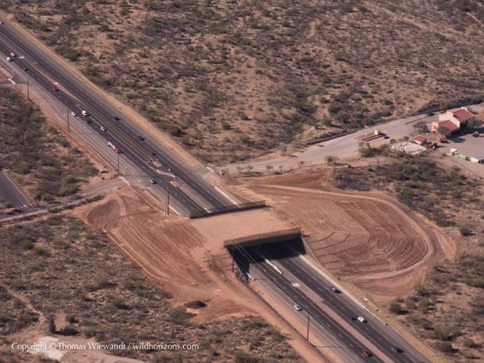 Puentes y cruces para animales 7