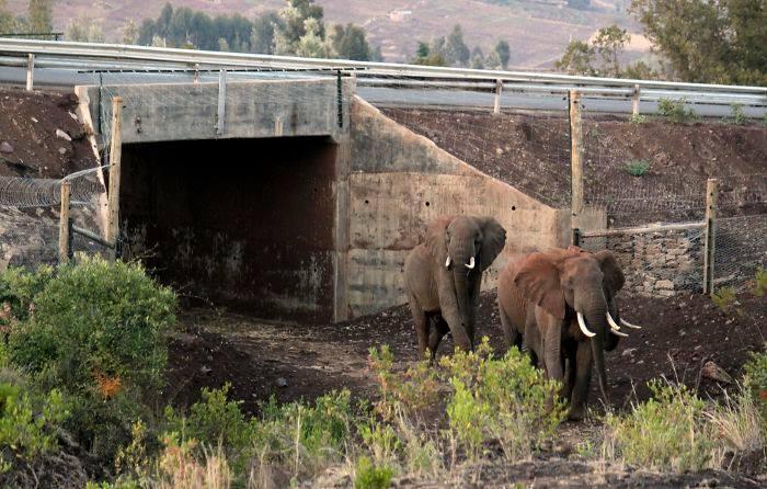 Puentes y cruces para animales 8