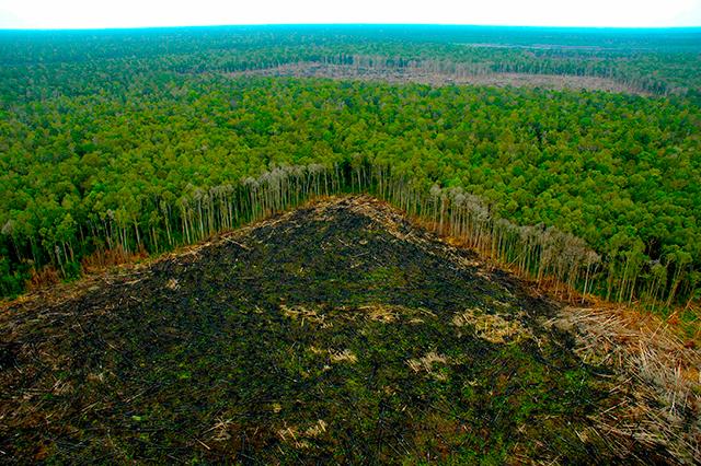 Deforestación de la selva amazónica